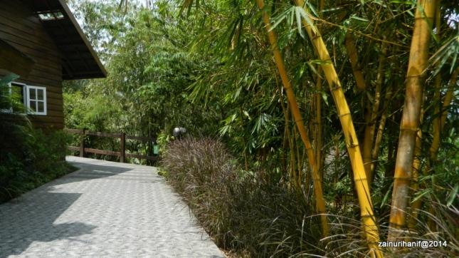 rumah hijau dengan bambu-bambu eksotis