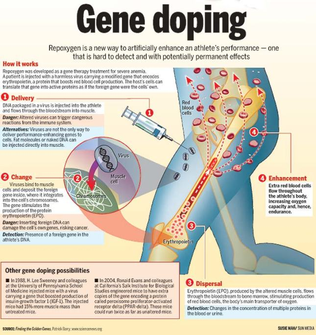 Sumber: http://www.snipview.com/q/Gene%20doping