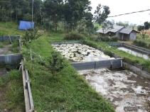 Kolam ikan (2)