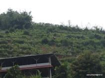Lereng gunung yang diolah